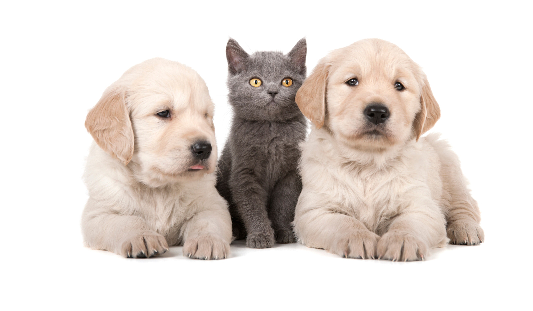 Puppy And Kitten Care Allcare Veterinary Hospital Of