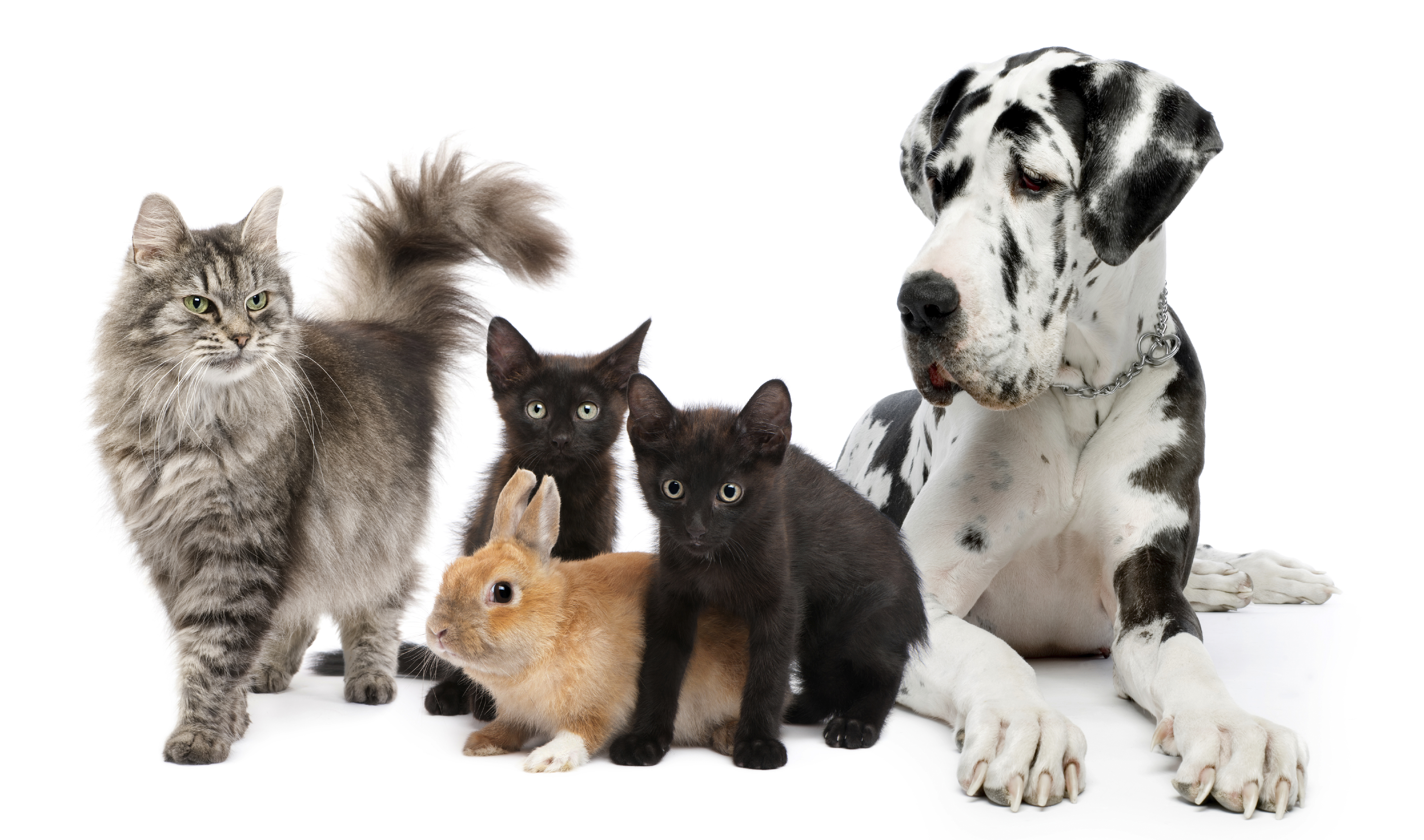 Importance Between Cats And Dogs